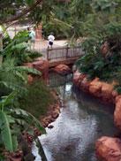 Beautiful Landscape at the Animal Kingdom Lodge