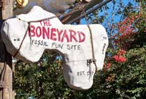 The Boneyard playground In DinoLand USA at Disney's Animal Kingdom.