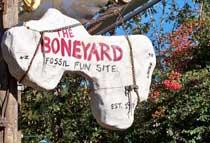 The Boneyard playground In DinoLand USA at Disney's Animal Kingdom.