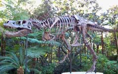 Sue the dinosaur at Disney's Animal Kingdom.