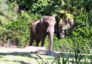 Kilimanjaro Safari Attraction At Disney's Animal Kingdom
