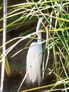 Bird at The Oasis in Disney's Animal Kingdom