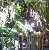 The Oasis at Disney's Animal Kingdom.