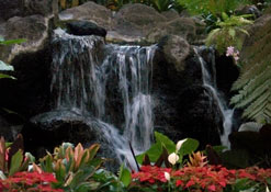 Garden inside lobby of Polynesian Resort