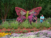 Butterfly topiary at the Butterfly Garden near Test Track in Future World