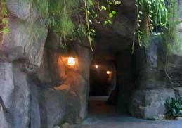 The Oasis in Disney's Animal Kingdom