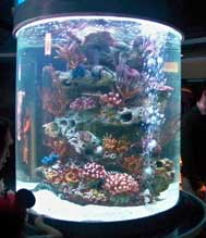 Observe real clown fish at these Nemo and Friends Aquariums.