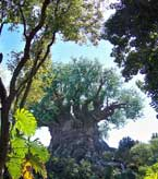 The Tree of Life at Disney's Animal Kingdom.