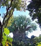 The Tree of life at Disney's Animal Kingdom.